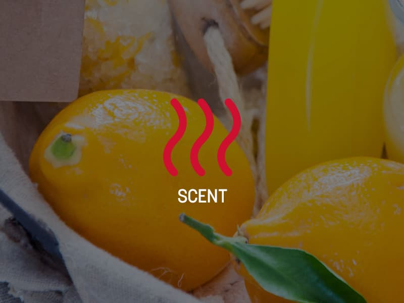 Scent Research